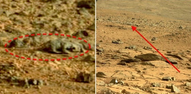 rat lizard in mars
