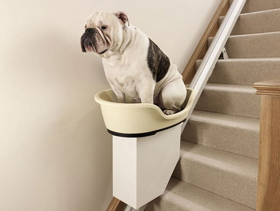 8000 dog lift help overweight canines up the stairs - Lift Up Stairs